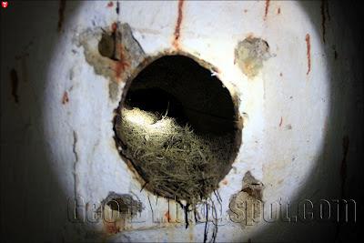Птичье гнездо в 55 ДОТ-е