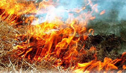 В России запретили сжигать сухую траву. Премьер-министр Дмитрий Медведев подписал постановление, которым запретил выжигать сухую траву на землях сельскохозяйственного назначения и разводить костры в полях.