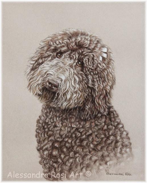 Pet portrait drawing, pencil portrait of a dog