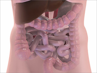 Scientists Use Dead Bacteria To Kill Colorectal Cancer