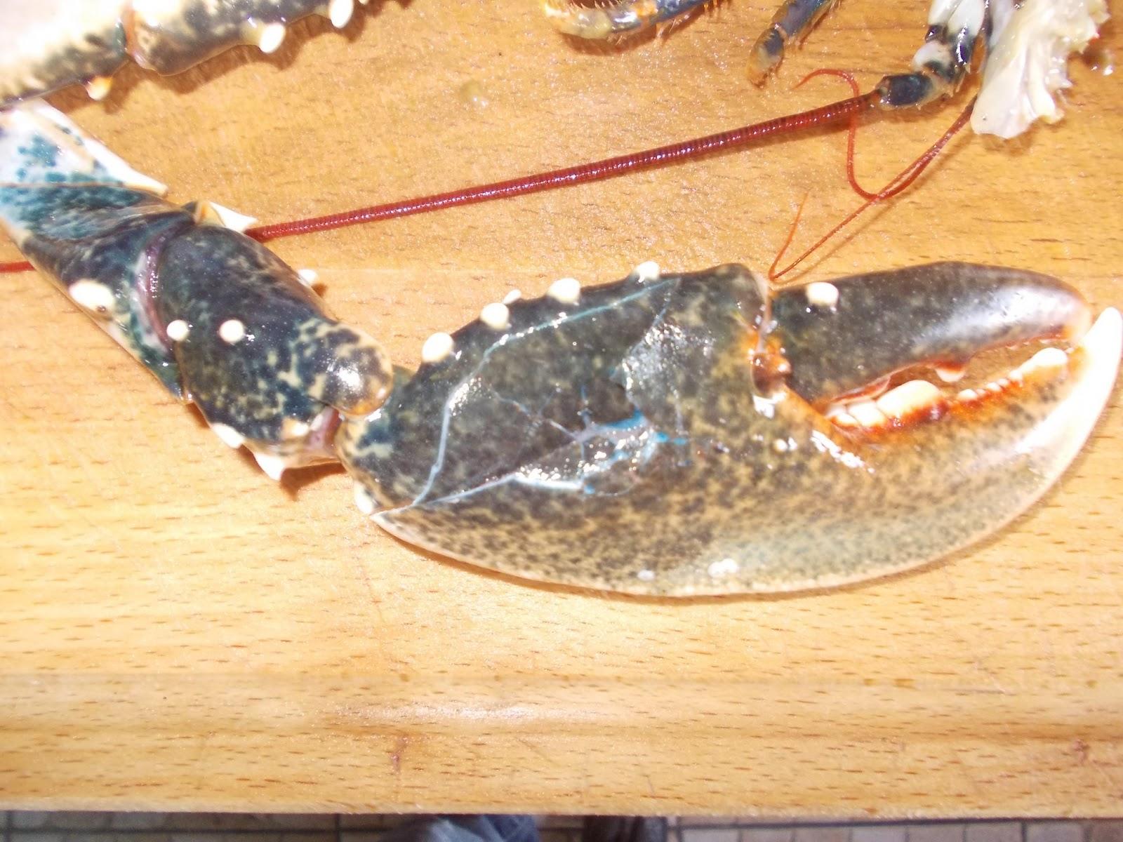 Как в домашних условиях приготовить омара в