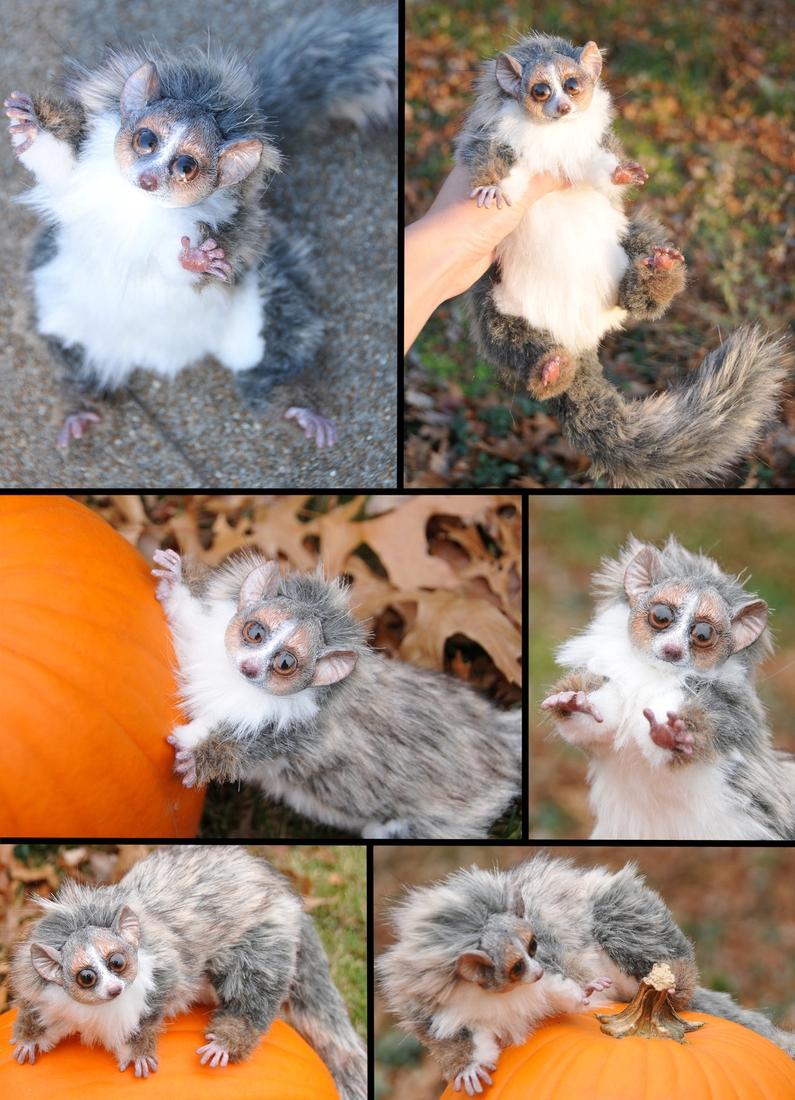 08-Mouse-Lemur-Jesse-Franks-Realistic-Faux-Animal-Sculptures-www-designstack-co