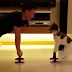 Puppy doing press ups goes viral as 21 million watches his workout with owner