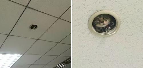 Gato é pego espionando funcionários em escritório e a internet não poupou criatividade