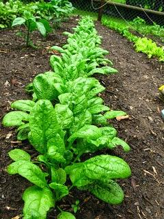 Descubre 6 Alimentos Vegetales Mayor Proteina