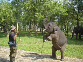 Tarif masuk Pusat Konservasi gajah
