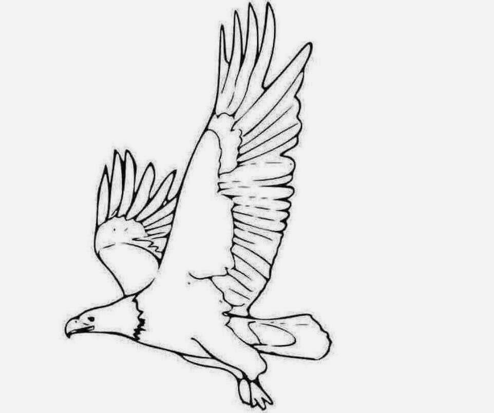 eagle coloring pages easy - photo #26