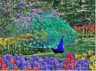 Pavo real en un paisaje de flores