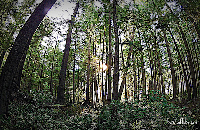 ozette trail