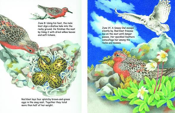 BIRDSONG BOOKS