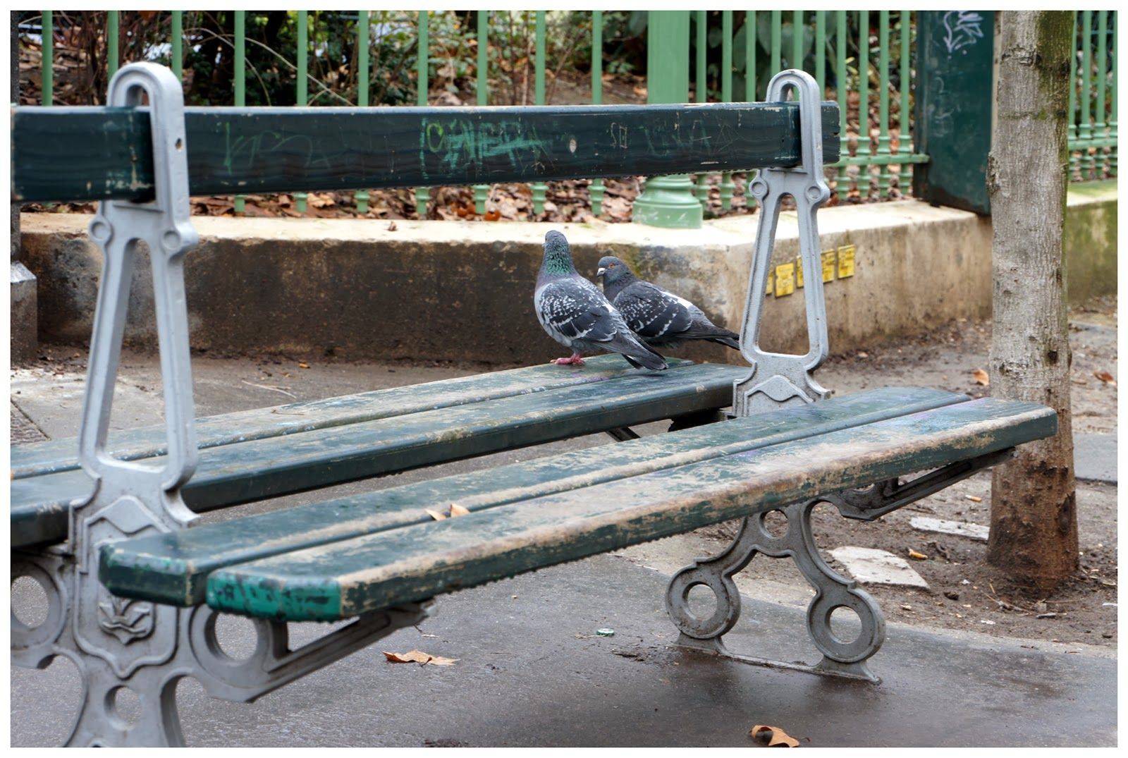 table de jardin banc