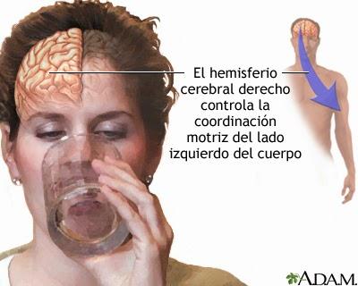 Mujer tomando agua con mano izquierda. Se destaca hemisferio cerebral derecho