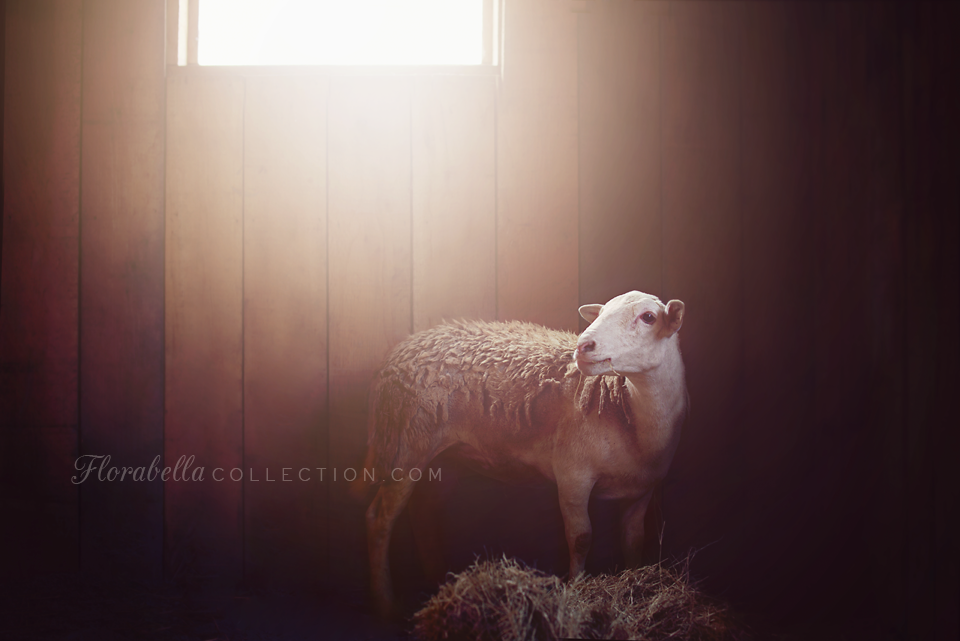 Hope the Rescue Sheep - Florabella
