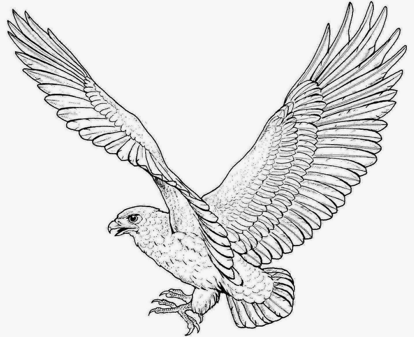 Colour drawing free wallpaper eagle coloring drawing free for Eagle coloring pages