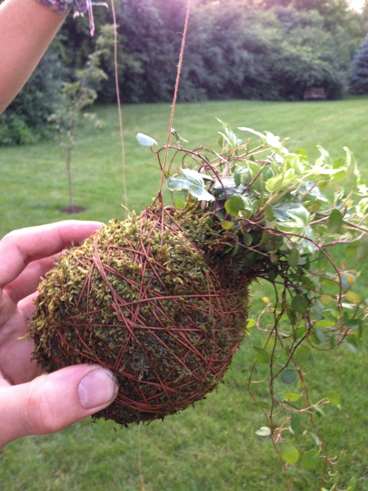 home japanese kokedama moss ball hanging plant