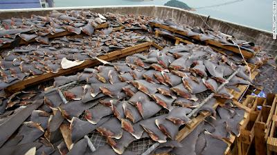 China-shark-fin-ban
