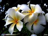 ดอกไม้ประจำชาติ