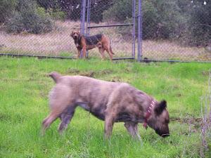 Meus cães