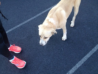 Χάθηκε το σκυλάκι της φωτογραφίας ακολουθώντας τους δρομείς του Μαραθωνίου. Έφυγε από τον Μαραθώνα και τερμάτισε με τους δρομείς στο Καλλιμάρμαρο. Δίνεται αμοιβή