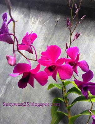 Bunga Anggrek yang Awet