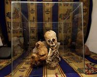 Momia con características no humanas hallada en Cusco. Foto: ANDINA/Percy Hurtado.