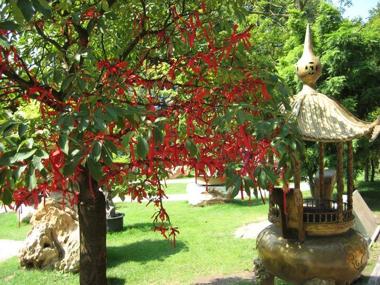 Entre deux rives l arbre souhaits - L arbre a souhait ...