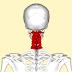 Medidas anatómicas y medidas deducidas