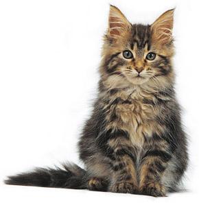 Cute Pussy Cat 26