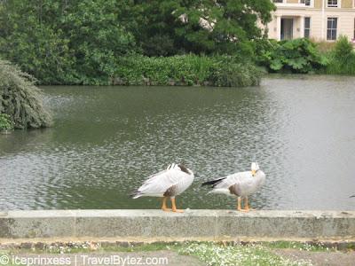 London Kew Gardens Ducks