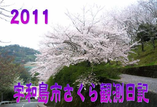 2011 宇和島市さくら観測日記