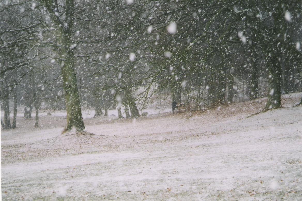 sneflokke