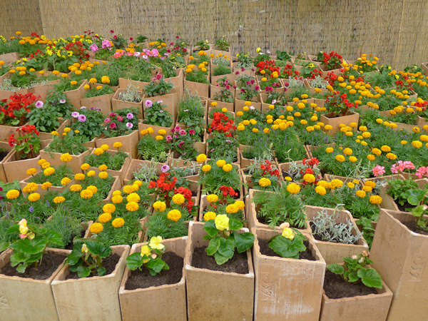 Homebuildlife: Hampton Court Flower Show