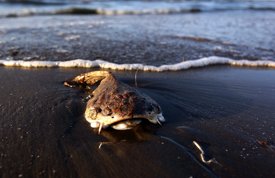bp and the gulf of mexico oil spill case study