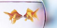 Ikan-ikan Pembawa Keberuntungan Bagi Pemiliknya
