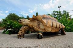 ISIL  geheimen van de schildpad