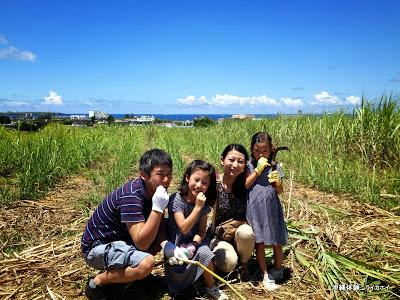 沖縄家族旅行 サトウキビ刈り 小学校 中学校 子ども夏休みの宿題 自由研究テーマ