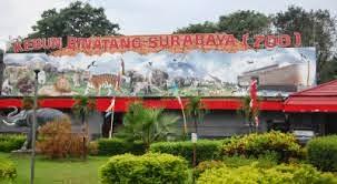 Inilah Tempat Wisata Kebun Binatang di Surabaya 2015.2