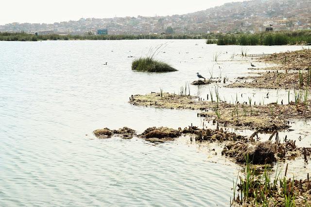 Los Pantanos de Villa, Lima Peru