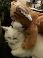 white cat hiding under a stuffed tiger toy