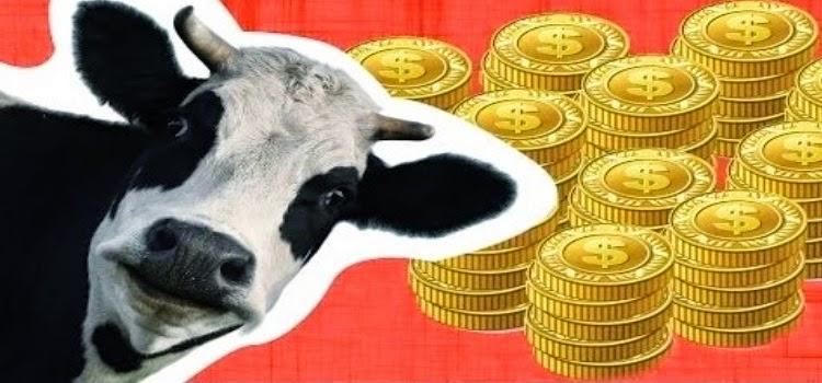 vacas explicada economia