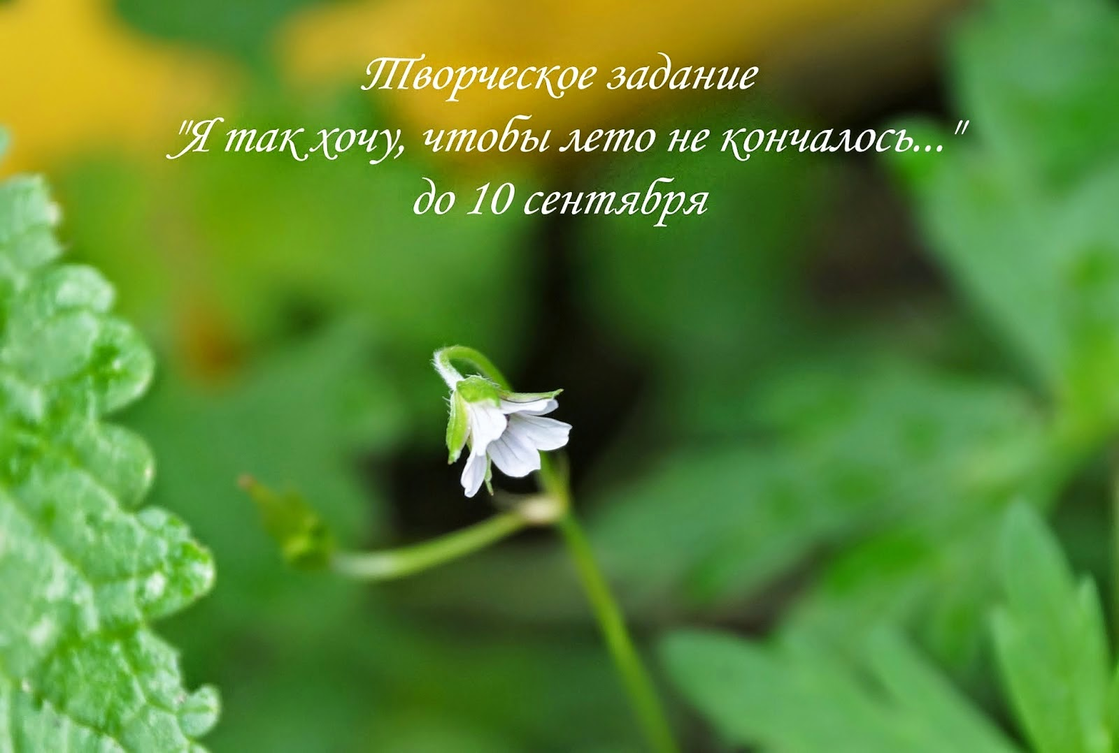 http://cherdaksovi.blogspot.ru/2014/07/blog-post_25.html