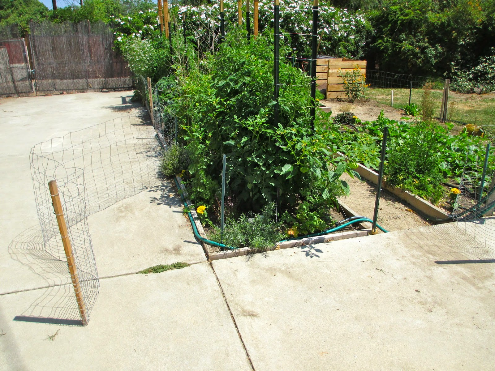 My 75 Ft Fence With 5 Gates Cost Less Than $100. It Is Made Of 28 Inch Rabbit  Fencing, 3 Ft Metal Garden Posts, 1 X 2 Inch Furring Strips, And Simple Eye  ...