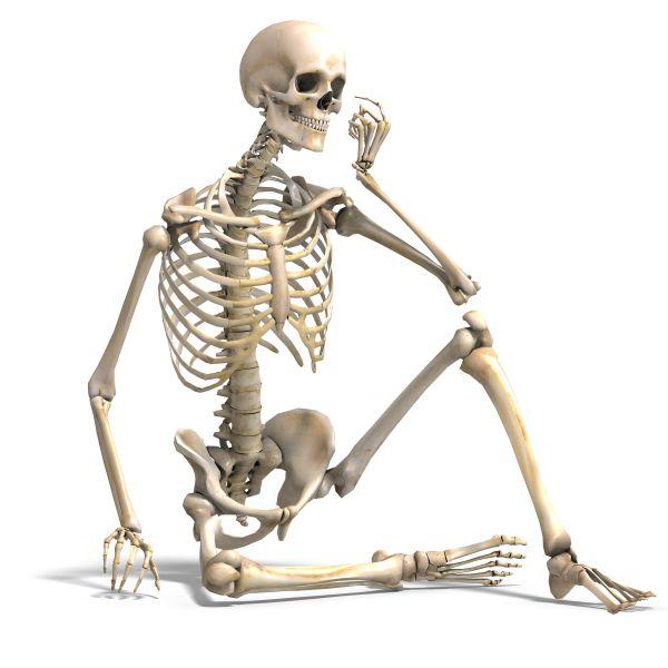 الهيكل-العظمي
