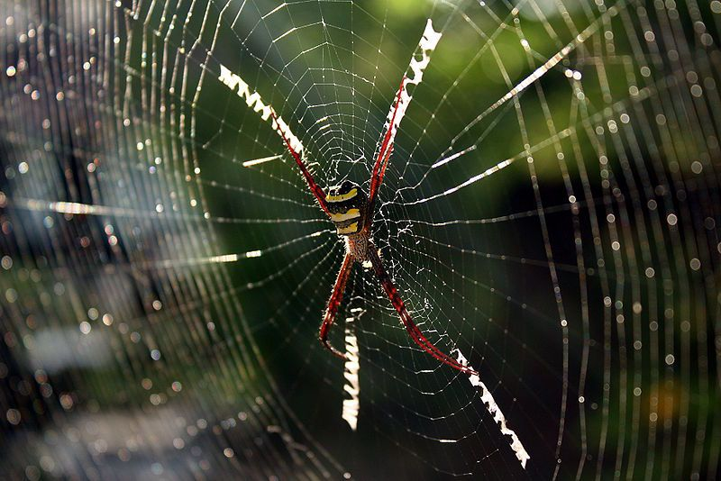 Image result for spider building web in atre