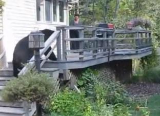 video de la mujer que le grita al oso y se va corriendo