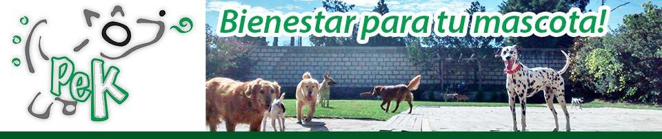 Gym Canino México - Paseos para Perros
