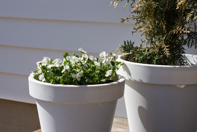 valkoiset kukat, kesäkukat, moderni puutarha