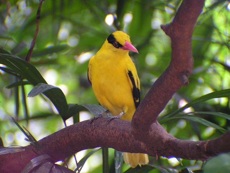 Gallery Photo Burung Indonesia Yang Dilindungi Ipa Edukasi