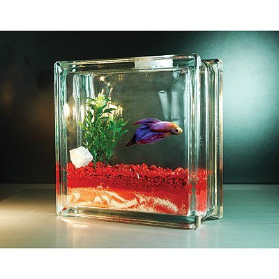 All About Betta Fish Tank Setup For Betta Fish