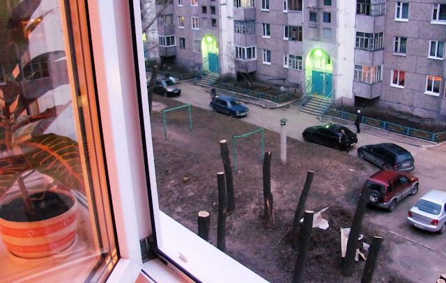 спиленные тополя на Каштаке в Томске